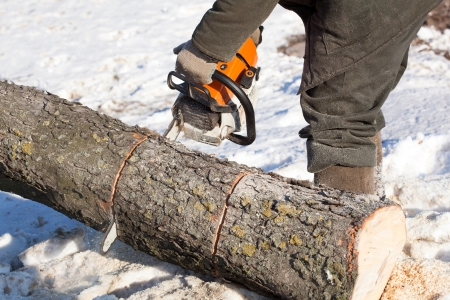 Lumberjack Worker with Chainsaw cutting tree photo