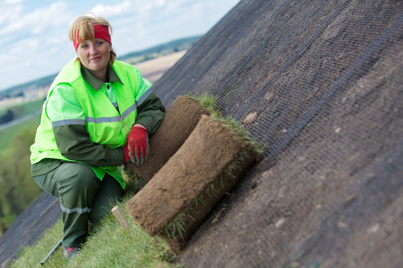 sod: Landscaper woman worker laying rolled sod grass turf for new lawn on inclined slope