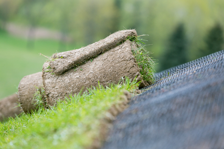 Applying rolled green grass with erosion control mesh on a slope 스톡 콘텐츠
