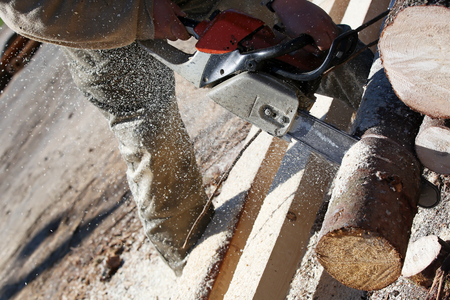 logger: Lumberjack worker with chainsaw cutting log of wood