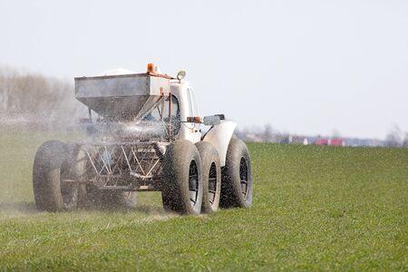 Farmer fertilizing winter crops land