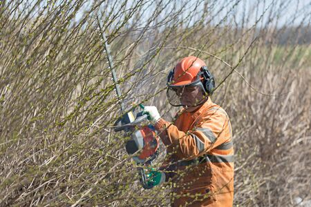 Professional Landscaper Pruning Shrubs with Hedge Trimmer Tool Imagens