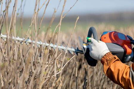 Gardener's Hands Pruning Shrubs using Gas Powered Hedge Trimmer
