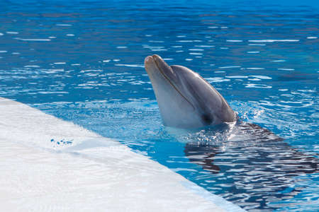porpoise: head a dolphin on background of the swimming pool water Stock Photo