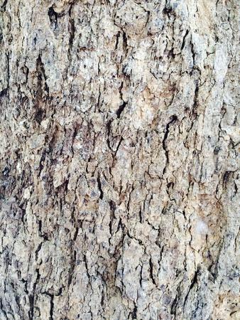 texture: Tree texture Stock Photo