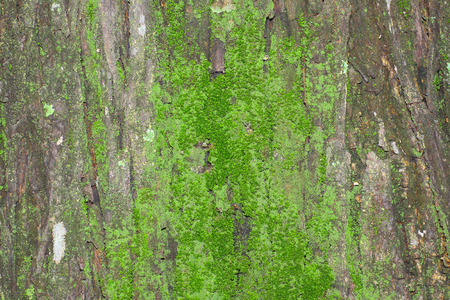 appealing: Moss grows  on the bark of this tree and creates an appealing texture. Stock Photo