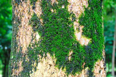 bask: Moss on the tree bask