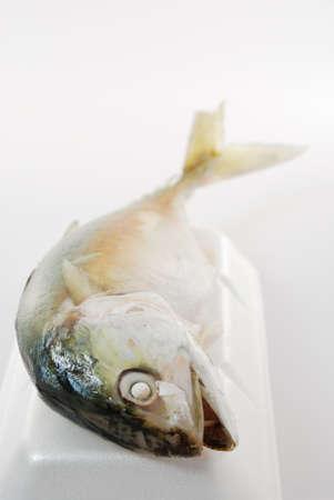 The mackerel steamed on white background photo