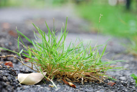 clump: Close up for the clump of grass on the roadside
