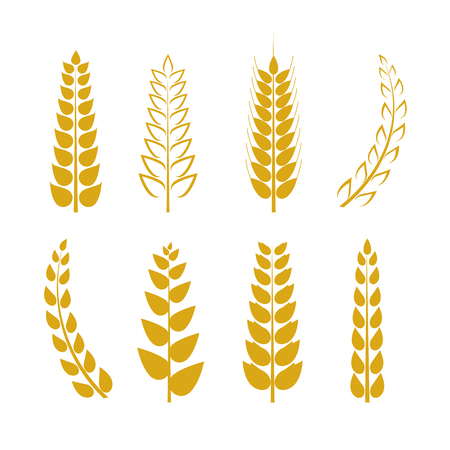 Vector Wheat Icons Set, Golden Wheat Ears Isolated on White Background, Logo Template.
