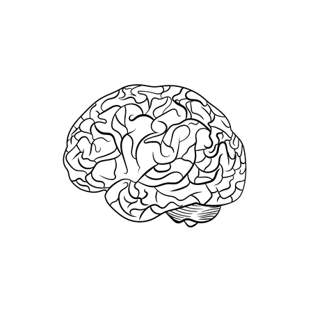 Vector Outline Brain, Line Graphic Art, Black Contour Lines isolated  on White Background.