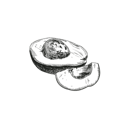 Vector Avocado Sketch, Outline Black Chalk Drawing Isolated on White Background Healthy Meals, Vegetable Fats.