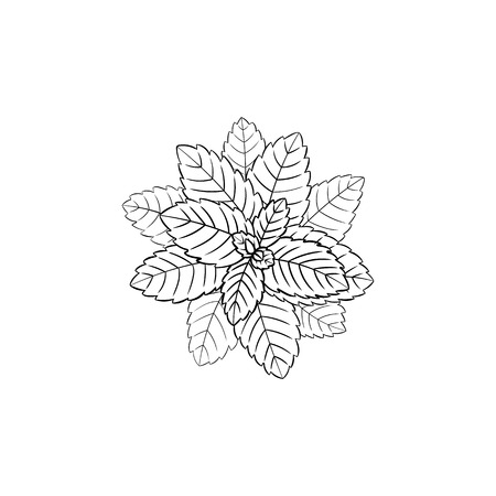 Vector Leaves Illustration, Icon, Black Lines Isolated on White Background.