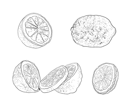Vector Collection of Hand Drawn Lemons, Sketchy Illustration, Drawings Isolated on White Background.