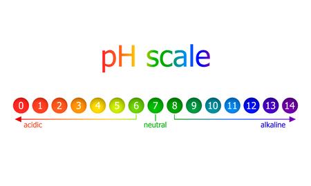 Schema di scala del pH di vettore, colori dell'arcobaleno, isolato su sfondo bianco illustrazione, concetto di mangiare sano. Vettoriali