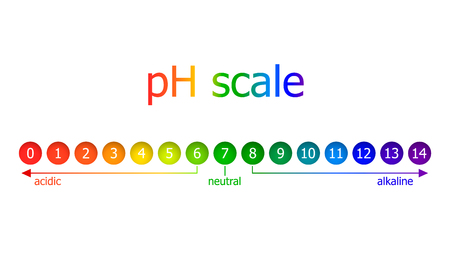 Vector pH Scale Scheme, Rainbow Colors, Isolated on White Background Illustration, Healthy Eating Concept.