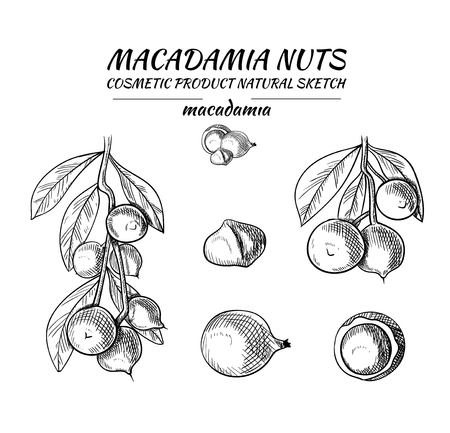 Vector Macadamia Nuts Sketches Collection, Black Outline Drawings Isolated on White Background.