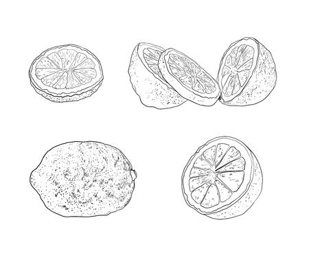Colección de vectores de bocetos de limón, dibujos de cítricos diferentes, ilustraciones negras de contorno aisladas sobre fondo blanco.