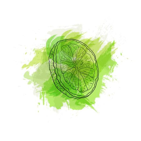Vector Hand Drawn Lime on Bright Green Watercolor Splash Background, Design Element Isolated on White Background.