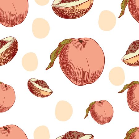 Vector Seamless Pattern Template, Peach, Fruits Background, Isolated on White Colorful Fruits, Hand Drawn Illustration.