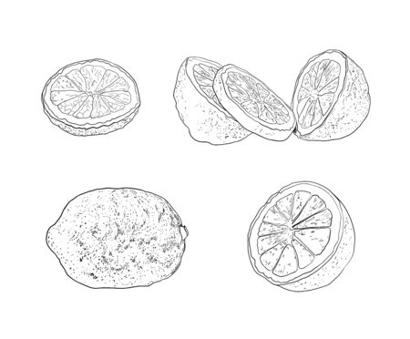 Vector Hand Drawn Lemons, Limes, Citrus Fruits Set, Contour Drawings Isolated on White Background, Black Outline Sketches Collection, Design Elements.