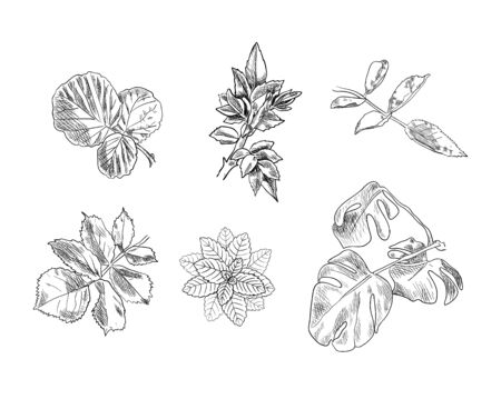 Vector Set of hand drawn Leaves,black Drawings isolated on white Background, skethed Illustration.