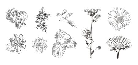 Vector hand drawn detailed illustrations isolated on white background, leaves and flowers, summer drawings set, flora decorative elements. 일러스트