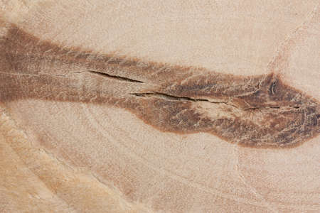 A fragment of plywood close up with knot - a natural disadvantage of wood.