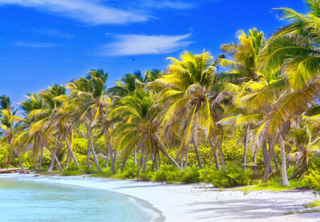 Beautiful tropical beach with palm trees postcard Archivio Fotografico
