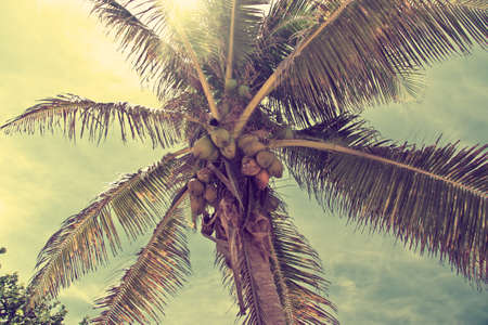 Beautiful tropical beach with palm trees retro Stock Photo - 9842717