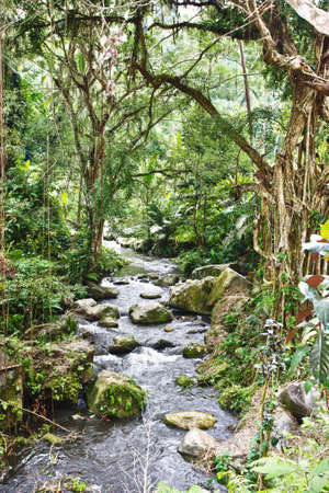 Beautiful rain forest at bali with river photo