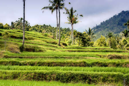 terraced: Beautiful rice terraces and some workers at field Stock Photo