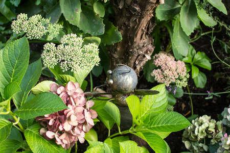 atta: formica operaia in giardino, immagine funy