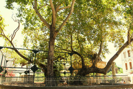 kos: Plane Tree of Hippocrates in Kos island