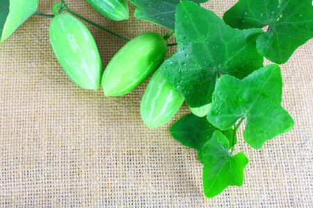 coccinia grandis: The Ivy Gourd (Coccinia grandis) Stock Photo