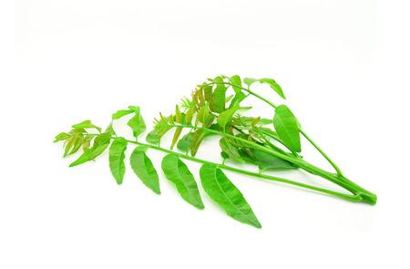 healthier: Azadirachta indica-Neem leaves isolated on white background Stock Photo