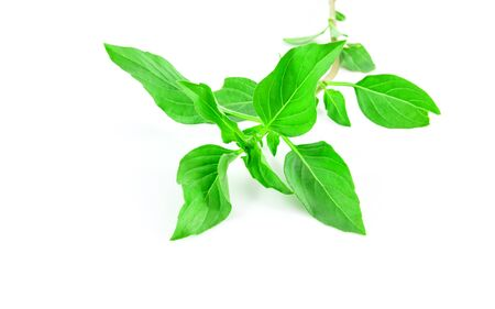 favoring: Sweet basil leaves isolated on white background Stock Photo