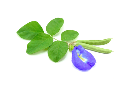 Butterfly pea with seeds isolated on white background