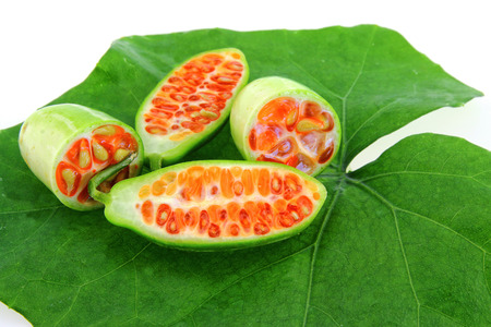 Ivy gourd fruit and leaf isolated on white background
