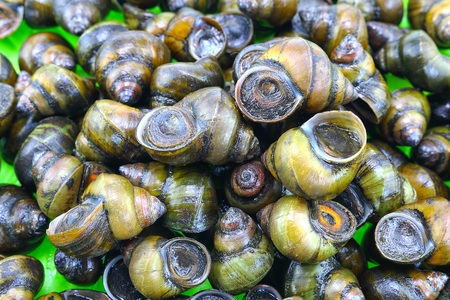 freshwater snails: Pile of freshwater snail Stock Photo