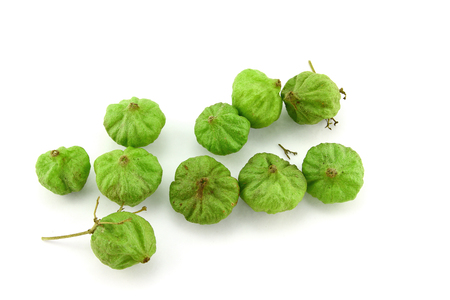 Teak seeds on white background Stock Photo
