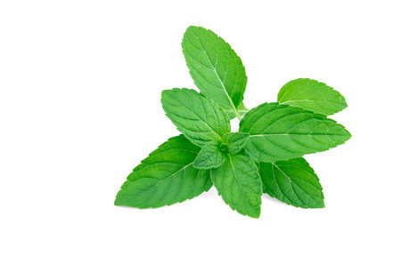 Fresh peppermint isolated on the white background Archivio Fotografico