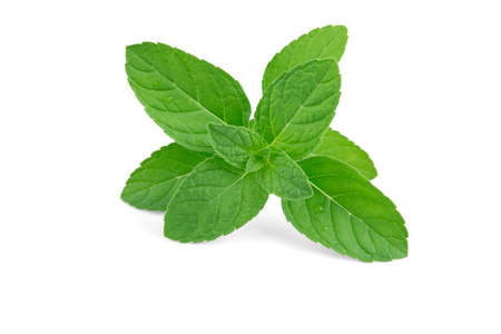 Fresh peppermint isolated on the white background