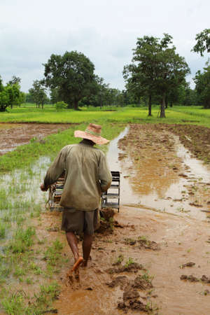 farmer preparing the ground for rice plantation Stock Photo - 21014743