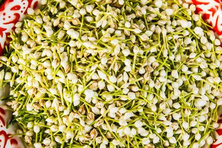 stamin: Young white jasmine