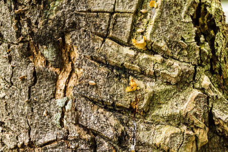 Tree bark texture Stock Photo - 21015266