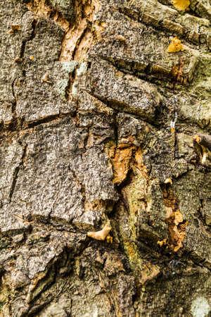 Tree bark texture Stock Photo - 21015267