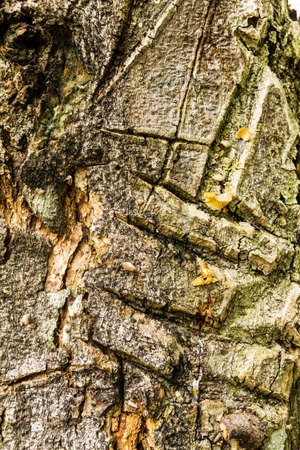 Tree bark texture Stock Photo - 21015268