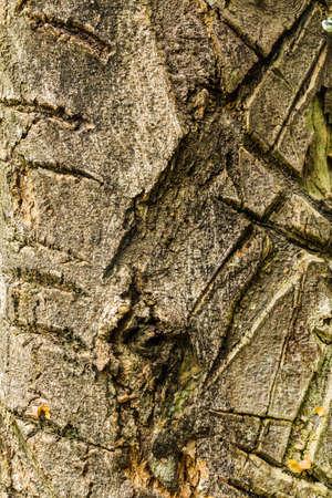 Tree bark texture Stock Photo - 21015269
