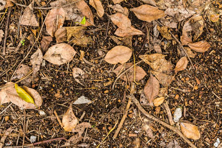 dry leaves texture on ground Stock Photo - 21015272
